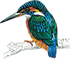 Alderley Kingfisher Logo