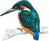 Alderley Kingfisher Logo